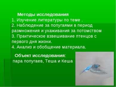Методы исследования 1. Изучение литературы по теме . 2. Наблюдение за попугая...