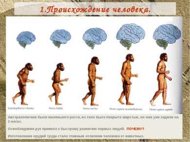 1.Происхождение человека. Австралопитеки были маленького роста, их тело было ...