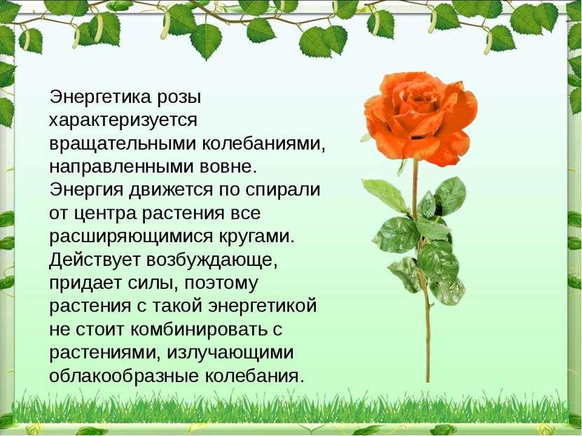 Энергетика розы характеризуется вращательными колебаниями, направленными вовн...