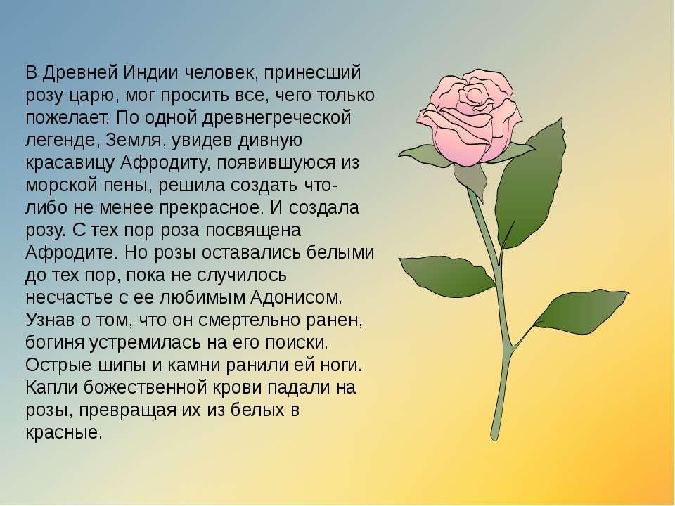 В Древней Индии человек, принесший розу царю, мог просить все, чего только по...