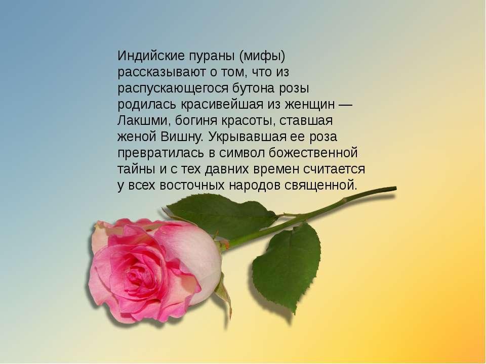 картинки цветы со стихами имя роза человека лице чаще