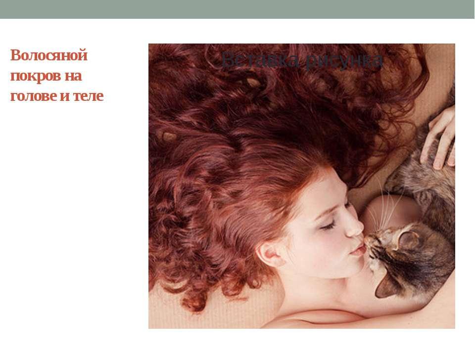 Волосяной покров на голове и теле Сохранение тепла, эстетическая красота, защ...
