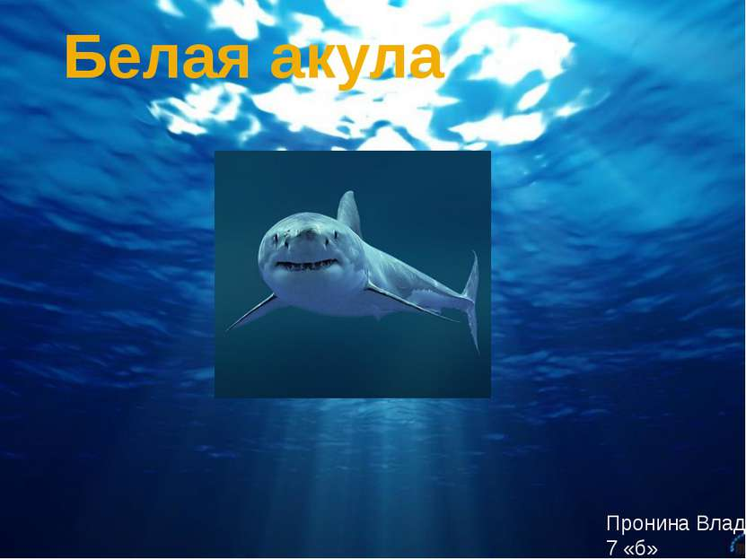 Белая акула Пронина Влада 7 «б»