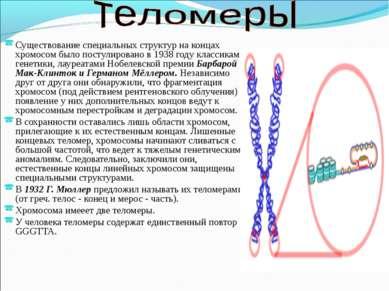 Существование специальных структур на концах хромосом было постулировано в 19...