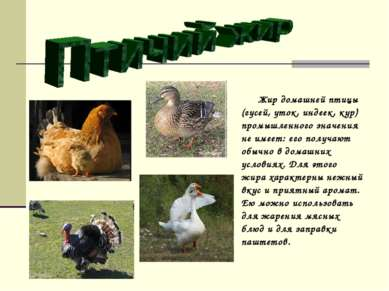 Жир домашней птицы (гусей, уток, индеек, кур) промышленного значения не имеет...