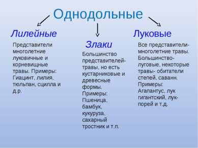 Однодольные Лилейные Злаки Луковые Представители многолетние луковичные и кор...
