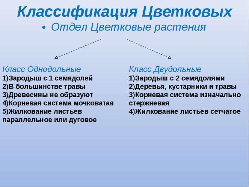 Отдел Цветковые растения Класс Однодольные Зародыш с 1 семядолей В большинств...
