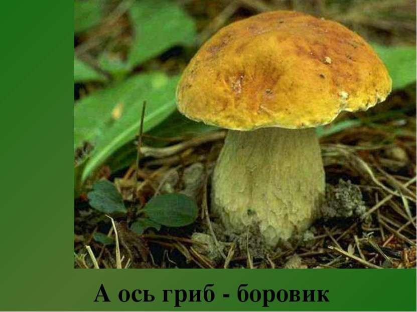 А ось гриб - боровик