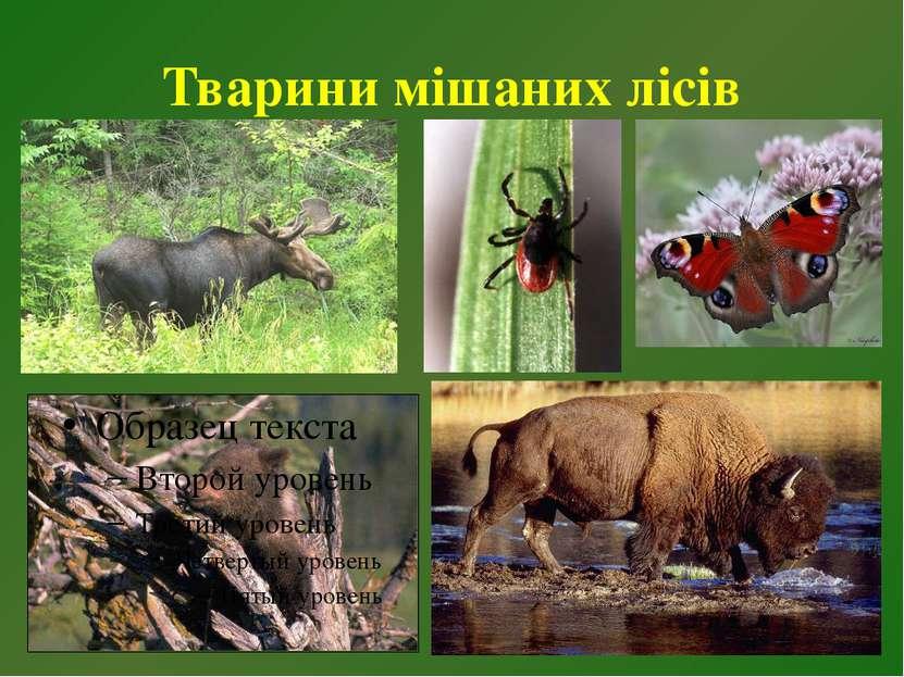 Тварини мішаних лісів