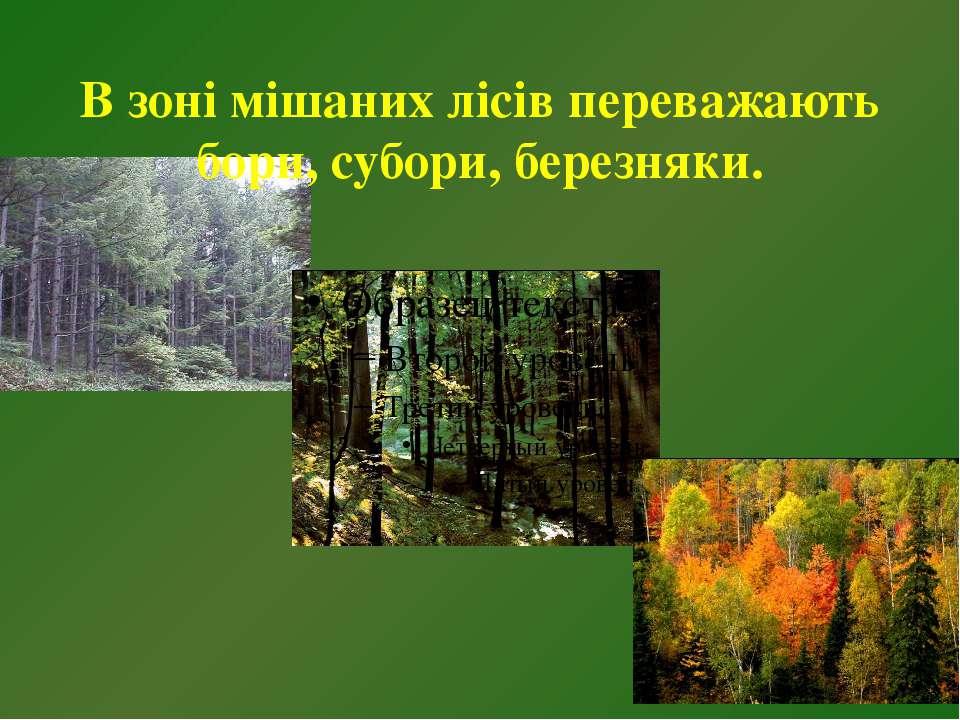 В зоні мішаних лісів переважають бори, субори, березняки.