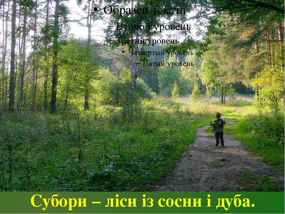 Субори – ліси із сосни і дуба.