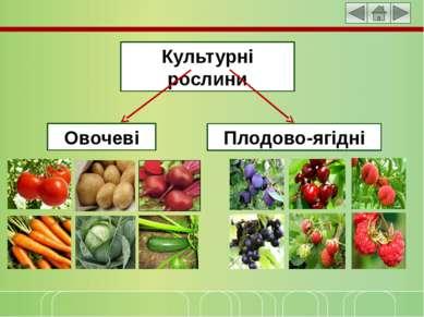 Культурні рослини Овочеві Плодово-ягідні