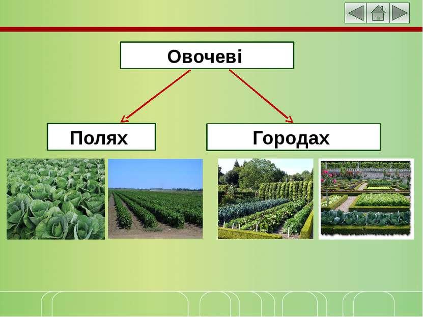 Овочеві Полях Городах