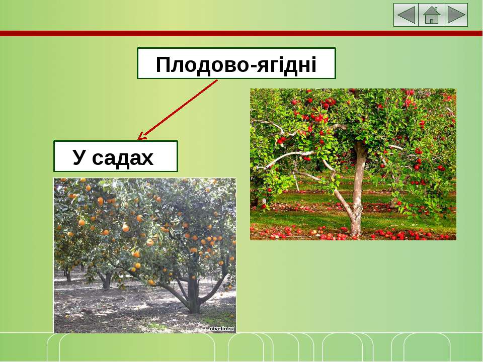 Плодово-ягідні У садах