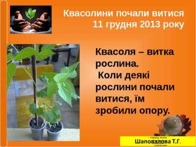 Квасолини почали витися 11 грудня 2013 року Квасоля – витка рослина. Коли дея...