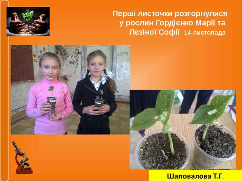 Перші листочки розгорнулися у рослин Гордієнко Марії та Лєзіної Софії 14 лист...