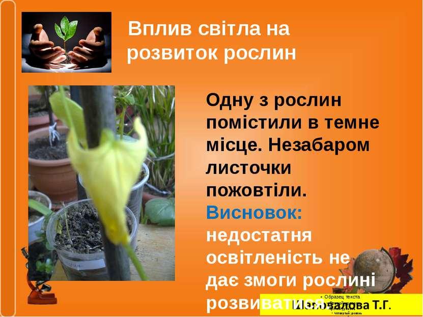 Вплив світла на розвиток рослин Одну з рослин помістили в темне місце. Незаба...