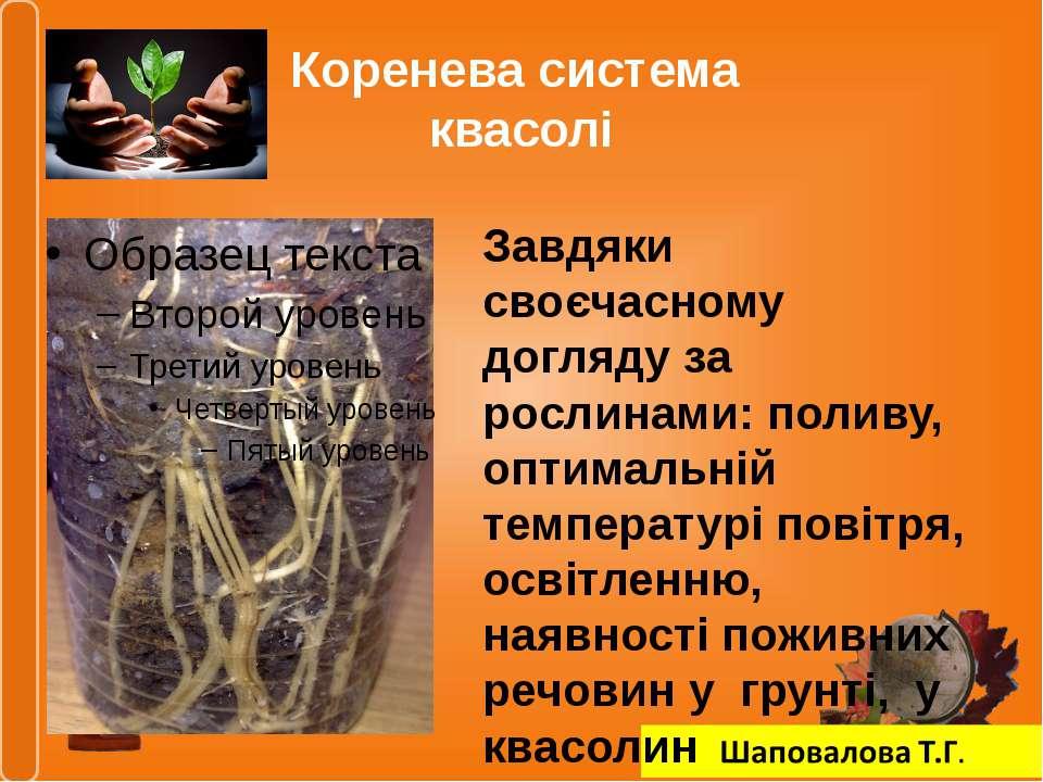 Коренева система квасолі Завдяки своєчасному догляду за рослинами: поливу, оп...