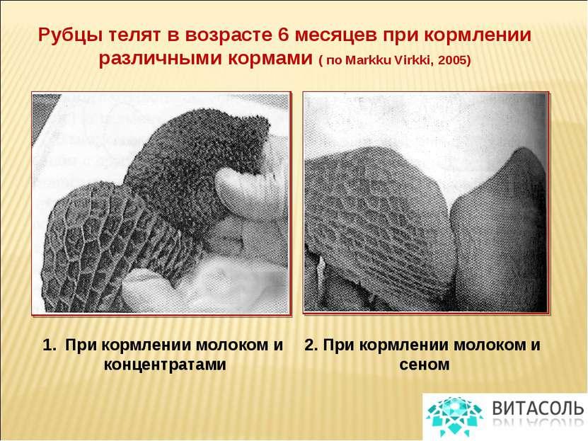 Рубцы телят в возрасте 6 месяцев при кормлении различными кормами ( по Markku...