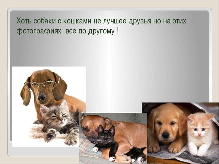 Кошки и собаки Хоть собаки с кошками не лучшее друзья но на этих фотографиях ...