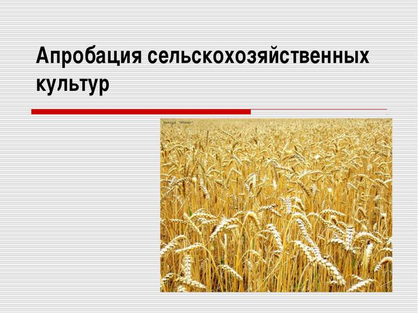 Апробация сельскохозяйственных культур