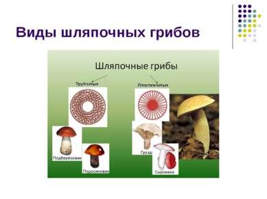 Виды шляпочных грибов