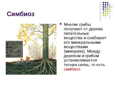 Симбиоз Многие грибы получают от дерева питательные вещества и снабжают его м...