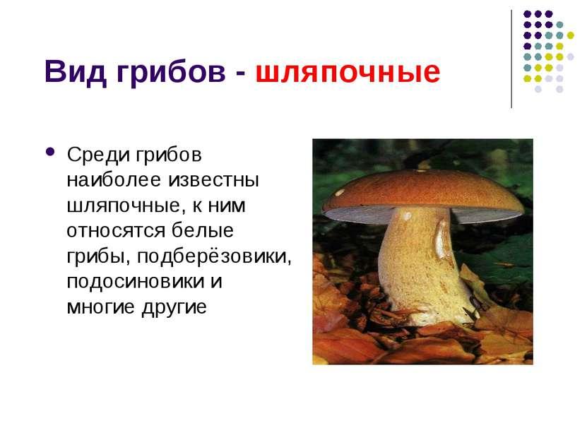 Вид грибов - шляпочные Среди грибов наиболее известны шляпочные, к ним относя...