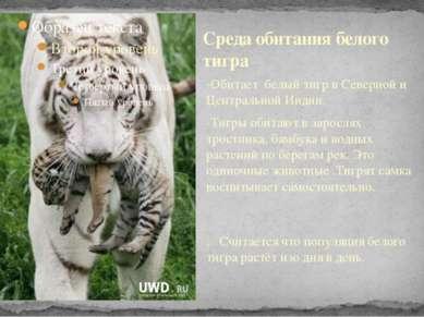 -Обитает белый тигр в Северной и Центральной Индии. -Тигры обитают в зарослях...