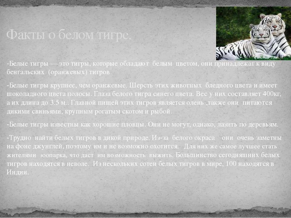 -Белые тигры — это тигры, которые обладают белым цветом, они принадлежат к ви...