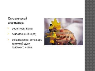Осязательный анализатор: рецепторы кожи; осязательный нерв; осязательная зона...