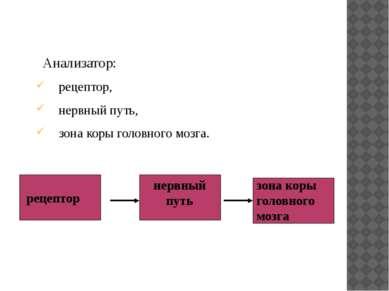 Анализатор: рецептор, нервный путь, зона коры головного мозга. рецептор