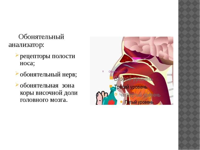 Обонятельный анализатор: рецепторы полости носа; обонятельный нерв; обонятель...