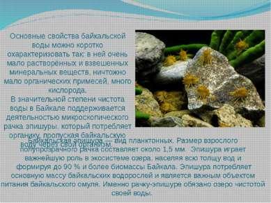 Байкальская эпишура — вид планктонных. Размер взрослого полупрозрачного рачка...