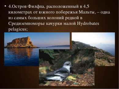 4.Остров Филфла, расположенный в 4,5 километрах от южного побережья Мальты, –...