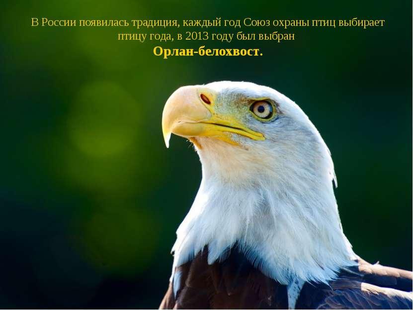 В России появилась традиция, каждый год Союз охраны птиц выбирает птицу года,...