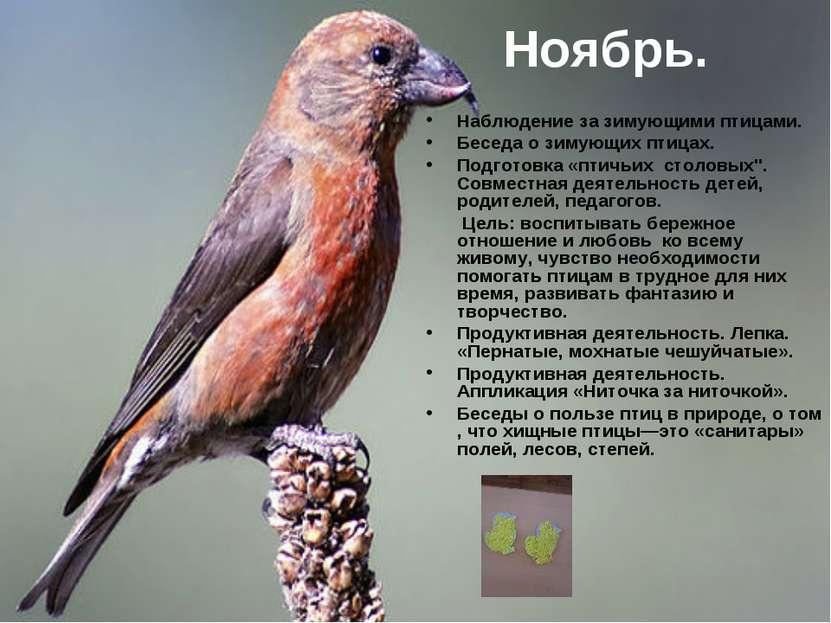 Ноябрь. Наблюдение за зимующими птицами. Беседа о зимующих птицах. Подготовка...