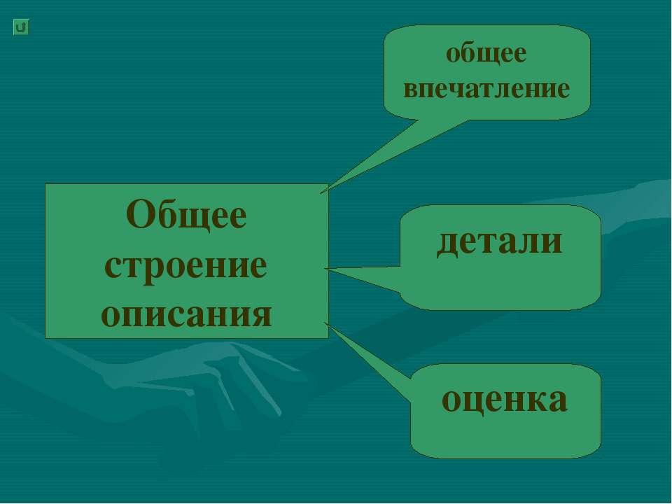 Общее строение описания общее впечатление детали оценка