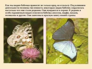 Как мы видим бабочки приносят не только вред, но и пользу. Под влиянием деяте...