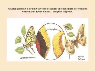 Крылья дневных и ночных бабочек покрыты цветными или блестящими чешуйками. Тр...