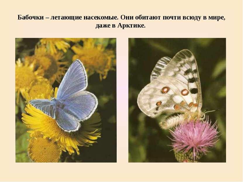 Бабочки – летающие насекомые. Они обитают почти всюду в мире, даже в Арктике.