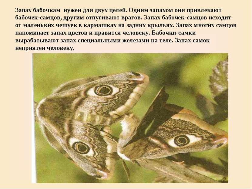 Запах бабочкам нужен для двух целей. Одним запахом они привлекают бабочек-сам...