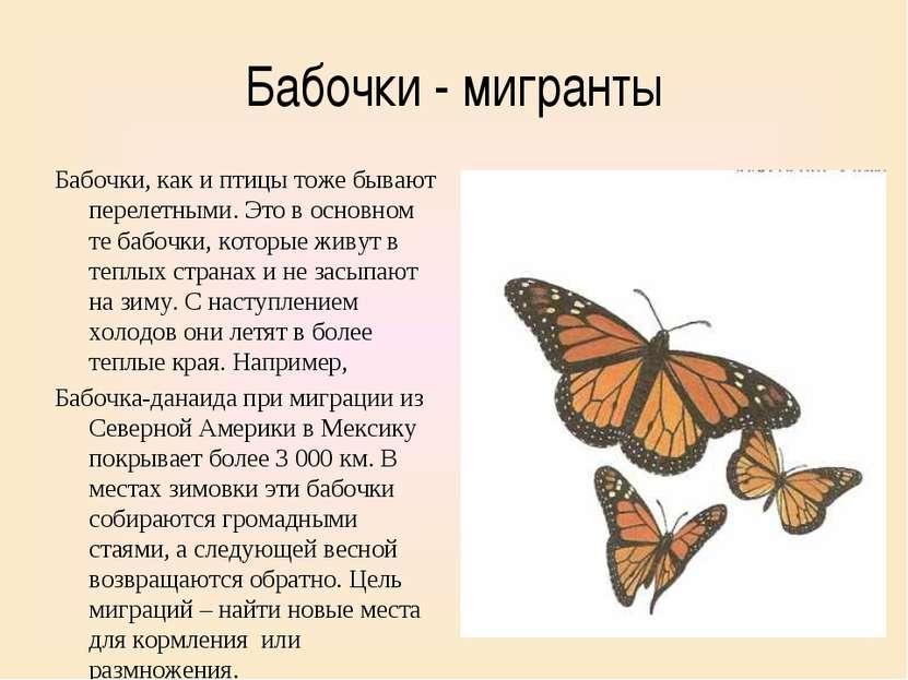 Бабочки - мигранты Бабочки, как и птицы тоже бывают перелетными. Это в основн...