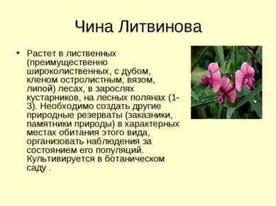 Чина Литвинова Растет в лиственных (преимущественно широколиственных, с дубом...