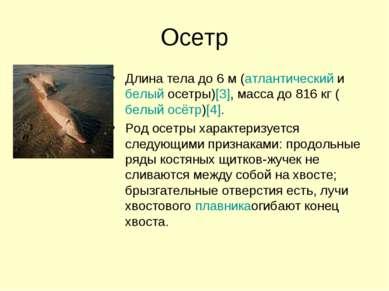Осетр Длина тела до 6 м (атлантическийибелый осетры)[3], масса до 816 кг (бе...