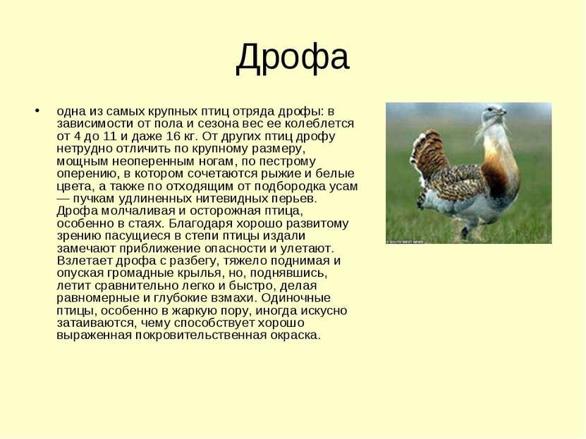 Дрофа одна из самых крупных птиц отряда дрофы: в зависимости от пола и сезона...