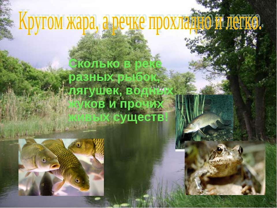 Сколько в реке разных рыбок, лягушек, водных жуков и прочих живых существ!