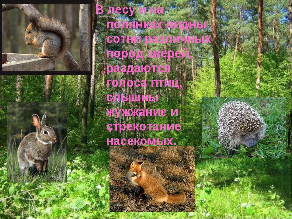 В лесу и на полянках видны сотни различных пород зверей, раздаются голоса пти...