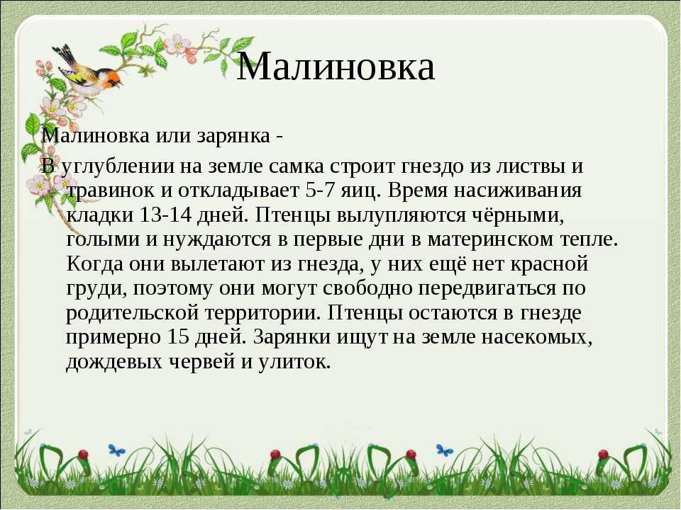 Малиновка Малиновка или зарянка - В углублении на земле самка строит гнездо и...