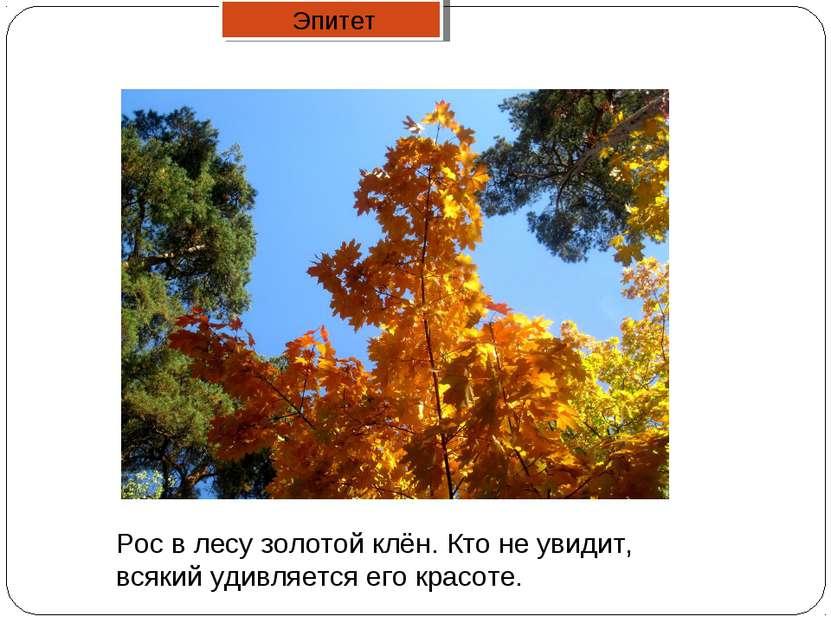 Рос в лесу золотой клён. Кто не увидит, всякий удивляется его красоте. Эпитет